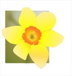 daffodil,nature,plant,season,spring,flower,yellow,media,clip art,public domain,image,png,svg