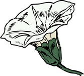 bindweed,flower,plant,color,externalsource