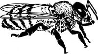 honey,media,clip art,externalsource,public domain,image,png,svg,animal,insect,bee,honey bee
