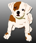 bulldog,puppy