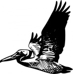 flying,pelican,clip art,remix,media,public domain,image,png,svg,fws,fws lineart,line art,bird,pelecanidae,fly,animal,nature,wing
