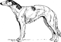 borzoi,animal,mammal,pet,dog,biology,zoology,line aer,black and white,contour,outline,dog breed,media,clip art,externalsource,public domain,image,png,svg,wikimedia common,psf,wikimedia common,wikimedia common,wikimedia common