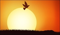 bird,population,under,sunset,material