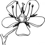 corolla,nature,plant,flower,biology,botany,line art,season,spring,summer,black and white,contour,outline,media,clip art,externalsource,public domain,image,png,svg,wikimedia common,psf,wikimedia common,wikimedia common,wikimedia common