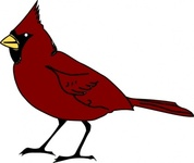 bird,cleanup,cardinal,colour,cartoon,animal,line art