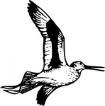 willet,bird,fly,wing,beak,tail,feather,animal,coloring book