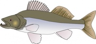fish,candat,animal,media,clip art,public domain,image,png,svg,cartoon,nature,pike