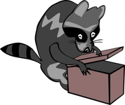 raccoon,opening,animal,mammal,box