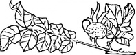 rose,branch,plant,media,clip art,externalsource,public domain,image,png,svg