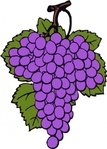 grape,cluster,plant,fruit,vine,food,media,clip art,externalsource,public domain,image,png,svg,grape,grape,grape,grape