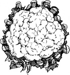 cauliflower,nature,plant,food,vegetable,biology,botany,line art,black and white,contour,outline,media,clip art,externalsource,public domain,image,png,svg,wikimedia common,psf,wikimedia common,wikimedia common,wikimedia common