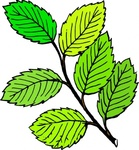 summer,leaf,remix,color,drawing,trace,tree,branch,twig,green,plant,nature,clip art,media,public domain,image,png,svg