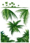 tropical,leaf,coconut tree,palm