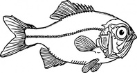 ugly,fish,animal,media,clip art,externalsource,public domain,image,png,svg
