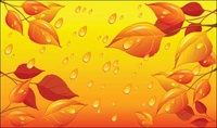leaf,water,natural,nature,leaf,yellow,dried,sun,drop,droplet,dew,object,misc,illustration,autumn,leaf,droplet,object