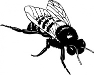 bumble,media,clip art,externalsource,public domain,image,png,svg,animal,insect,bee,bumble bee