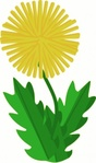 dandelion,idea,nature,herb,plant,flower,yellow,season,spring,media,image,png,clip art,public domain,svg
