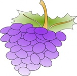grape,food,fruit,wine,purple,media,clip art,externalsource,public domain,image,png,svg,grape,grape,grape,grape,grape,grape