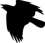 crow,flying,bird,nature,black,raven,animal,gothic,sky,wing,dark,silhouette