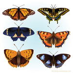 butterfly,element,insect,animal,nature,color,colorful,colorful butterfly
