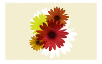 colorful,daisy,flower,background,object,element