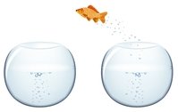 goldfish,fish,bowl,jumping