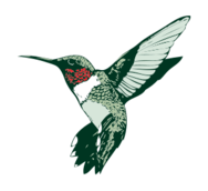 hummingbird,ruby-throated,hummer,bird