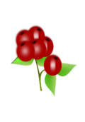 fruit,red,berry,leaf,bunch,edible,natural,food,healthy,sweet