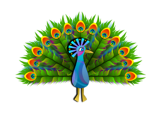 peacock,bird,stylised,color,colorful