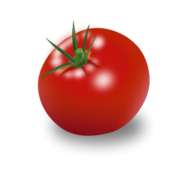 food,fruit,tomate,tomato,plant,nature,biology,solanum lycopersicum,paradeiser,vegetable,green,farm,color,paradiesapfel,essen