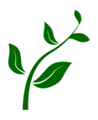 plant,seeding,seed,floral,green