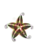 star,sea star,starfish,flower,decoration