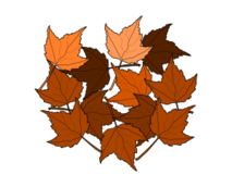 autumn,fall,bujung,maple,leaf,plant