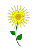 flower,sunflower,tree,aungkarn,bujung,tonrak,flower,flowers,sunflower,trees,aungkarn,bujung,tonrak