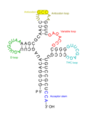 rna,transfer,trna,science,biology,molecule,structure,glycine,rna,trna
