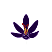 plant,flower,crocus,saffron,bloom,flora