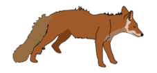 fox,red,brown,animal,colour,mammal,color
