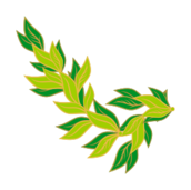 bay leaf,border,plant,sk1,media,clip art,public domain,image,png,svg