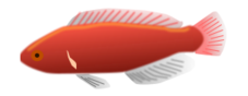 Red aquarium fish clip art vector free vector graphics for Jordans fish and chicken near me