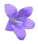 purple,violet,flower,plant,nature,media,clip art,public domain,image,png,svg