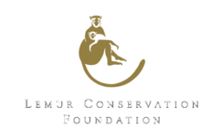 Lemur,Conservation,Foundation