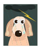 dog,rain,weather,storm,lightening,thunderstorm,homeless