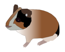 media,clip art,public domain,image,png,svg,cartoon,animal,mammal,rodent,pet,guinea pig