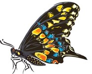 butterfly,vector